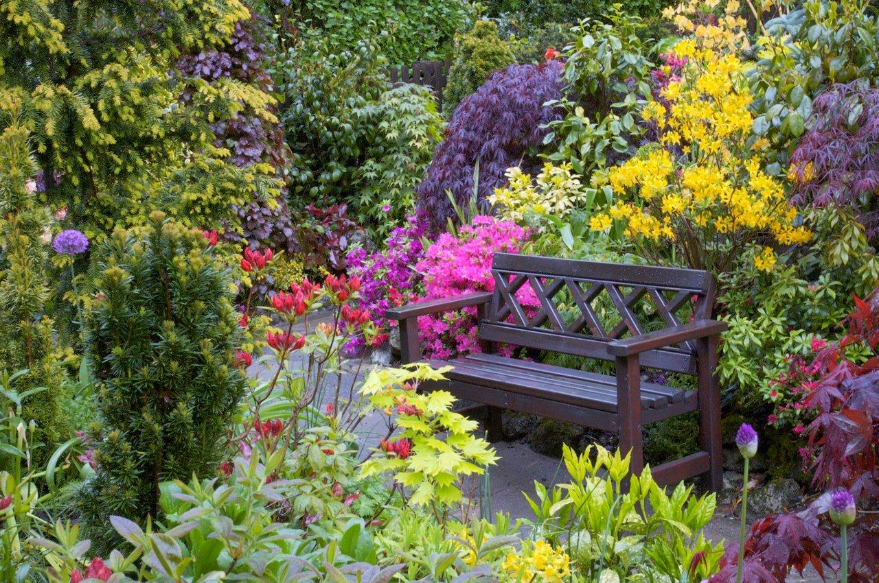 Фото красивый сад с цветами